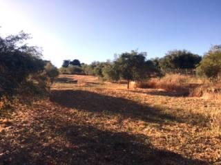 Foto - Terreno agricolo in Vendita a Bagheria