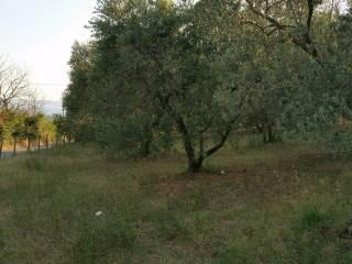 Foto - Terreno agricolo in Vendita a Trevignano Romano