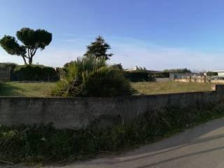 Foto - Terreno agricolo in Vendita a Nettuno