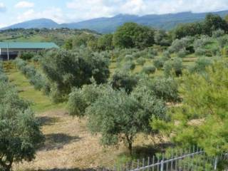 Foto - Terreno agricolo in Vendita a Lattarico