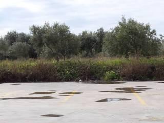 Foto - Terreno agricolo in Vendita a Siderno