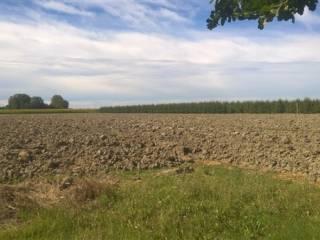 Foto - Terreno agricolo in Vendita a Ferrara