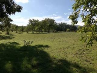 Foto - Terreno agricolo in Vendita a Lariano