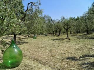 Foto - Terreno agricolo in Vendita a San Miniato