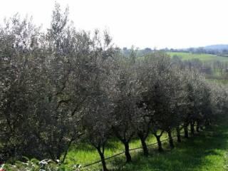 Foto - Terreno agricolo in Vendita a Pozzolengo