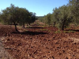 Foto - Terreno agricolo in Vendita a Alghero