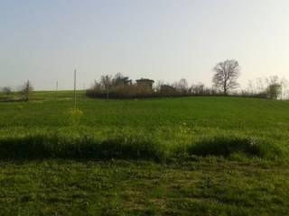 Foto - Terreno agricolo in Vendita a Castelvetro di Modena
