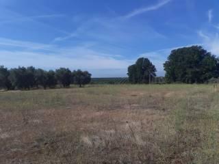 Foto - Terreno agricolo in Vendita a Cori