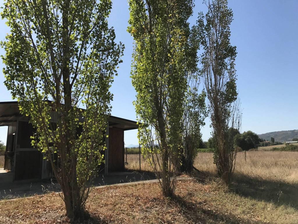 foto  Terreno agricolo in Affitto a Lucignano
