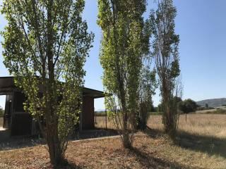 Foto - Terreno agricolo in Affitto a Lucignano