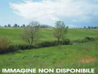 Foto - Terreno agricolo in Vendita a Anghiari