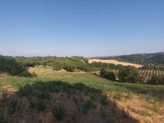 Foto - Terreno agricolo in Vendita a Viterbo