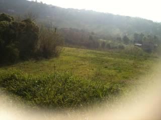 Foto - Terreno agricolo in Vendita a Caiazzo