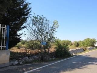 Foto - Terreno agricolo in Vendita a Putignano