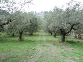 Foto - Terreno agricolo in Vendita a Pescara