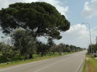Foto - Villa via Roma 420, Salve