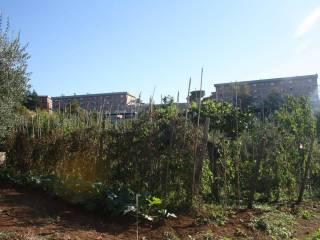 Foto - Terreno agricolo in Vendita a Velletri