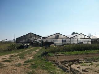 Foto - Terreno agricolo in Vendita a Viareggio