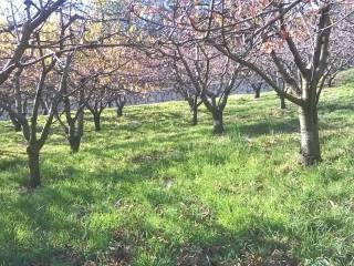 Foto - Terreno agricolo in Vendita a Caprino Veronese