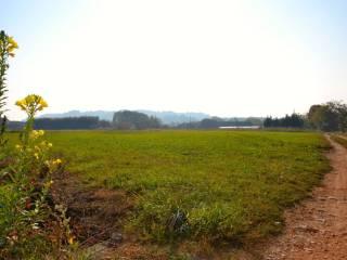 Foto - Terreno agricolo in Vendita a Vigliano Biellese