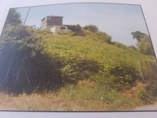 Foto - Terreno agricolo in Affitto a Castelnuovo di Porto