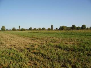 Foto - Terreno agricolo in Vendita a Gambara