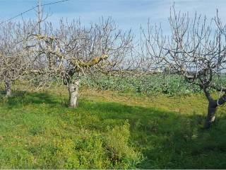 Foto - Terreno agricolo in Vendita a Nardò