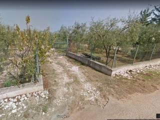 Foto - Terreno agricolo in Vendita a Trani