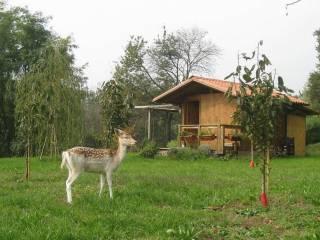 Foto - Terreno agricolo in Vendita a Luvinate