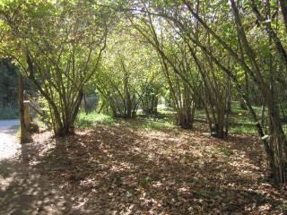 Foto - Terreno agricolo in Vendita a Vallerano