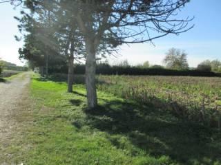 Foto - Terreno agricolo in Vendita a Piazzola sul Brenta