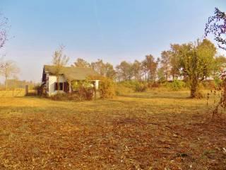 Foto - Terreno agricolo in Vendita a Sommariva del Bosco