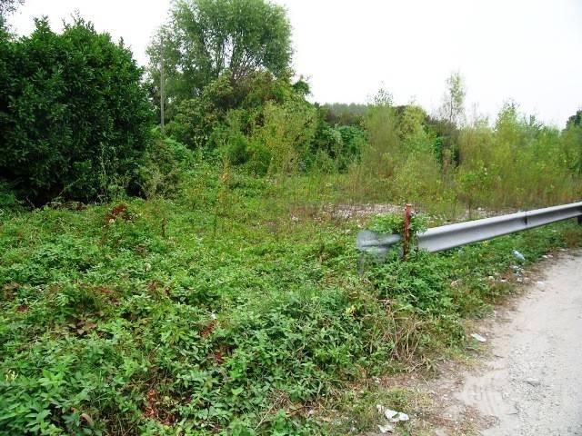 foto  Farmland for Sale in Ronchis