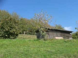 Foto - Terreno agricolo in Vendita a Adrara San Martino
