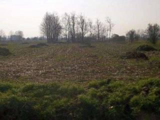 Foto - Terreno agricolo in asta a Caravaggio