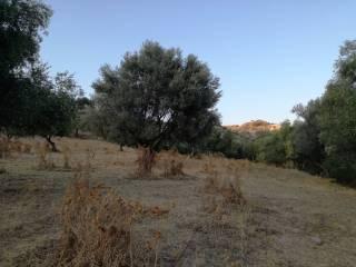 Foto - Terreno agricolo in Vendita a Palizzi