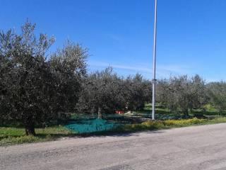 Foto - Terreno edificabile residenziale a Ortona