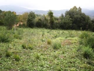 Foto - Terreno edificabile residenziale a Capoliveri