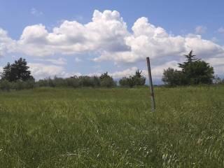 Foto - Terreno agricolo in Vendita a Cepagatti