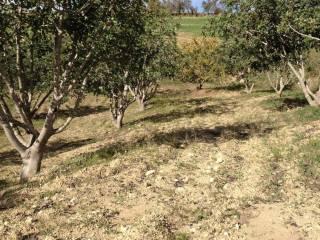 Foto - Terreno agricolo in Vendita a Buscemi