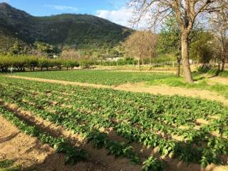 Foto - Terreno agricolo in Vendita a Castel San Giorgio