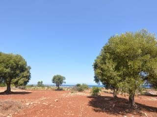 Foto - Terreno agricolo in Vendita a Carovigno