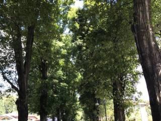 Foto - Villetta a schiera via Vasche, Casciago