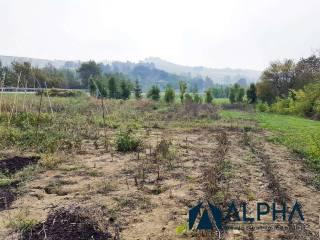 Foto - Terreno agricolo in Vendita a Castrocaro Terme e Terra del Sole