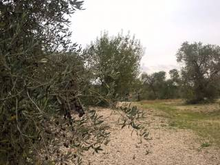 Foto - Terreno agricolo in Vendita a Toritto