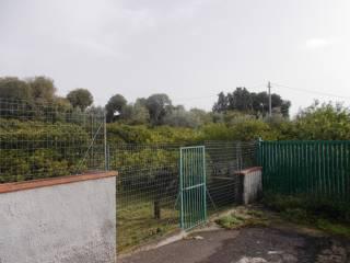 Foto - Terreno agricolo in Vendita a San Gregorio di Catania