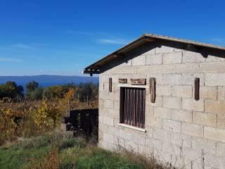 Foto - Terreno agricolo in Vendita a Bolsena