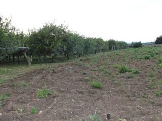 Foto - Terreno agricolo in Vendita a Siracusa