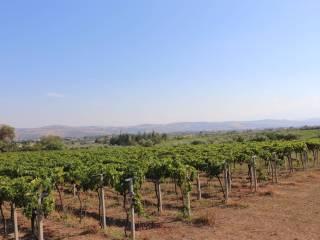 Foto - Terreno agricolo in Vendita a Spinetoli