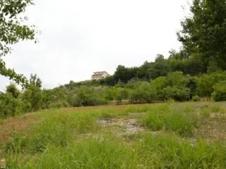 Foto - Terreno agricolo in Vendita a Cosenza
